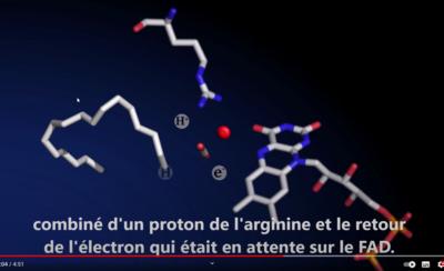 Enzyme FAP